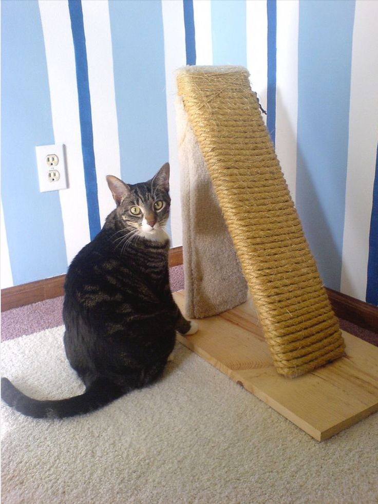 Pin by Anne Denny on Maddie Diy cat scratching post
