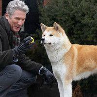 #dogalize Razza del cane Hachiko: aspetto e carattere dell'Akita Inu #dogs #cats #pets