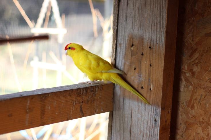 Kakariki du Martinaa .... à découvrir lors de votre séjour au Domaine du Martinaa