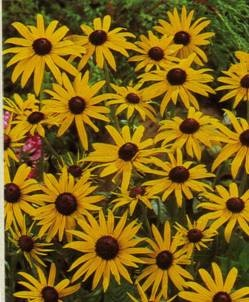 48 best flowers that come back every year images on pinterest van bourgondien sons wholesale flower bulbs and perennials find this pin and more on flowers that come back every year mightylinksfo