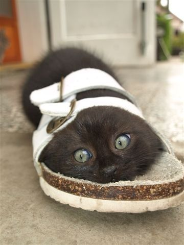kittens love sandals. I cold see Fiona doing things.