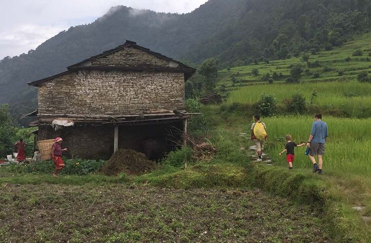 Children walking through rice terraces on the way to Dhampus, Nepal