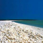 Плажата од школки во заливот на ајкулите, Австралија
