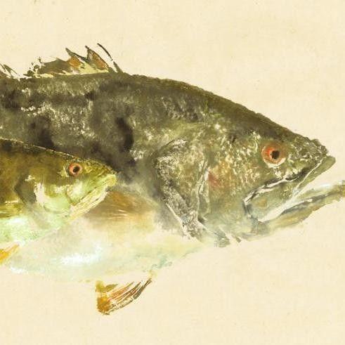 Lobina negra patada lateral Gyotaku pescado por fredfisher