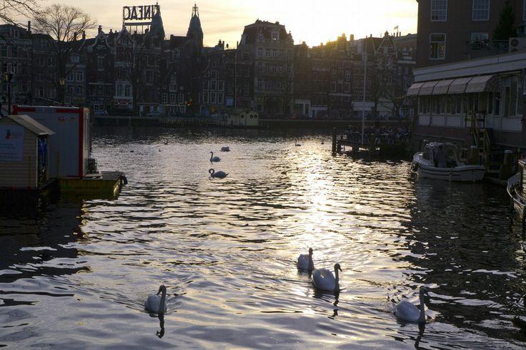 Swans by Dana Marin on 500px