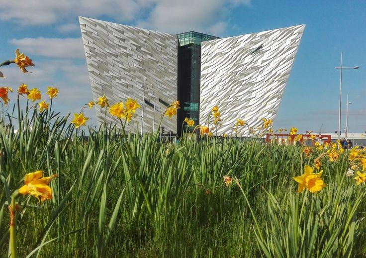 La magnifica architettura del museo Titanic Belfast, in un bel giorno di primavera, con tanti narcisi in fiore!