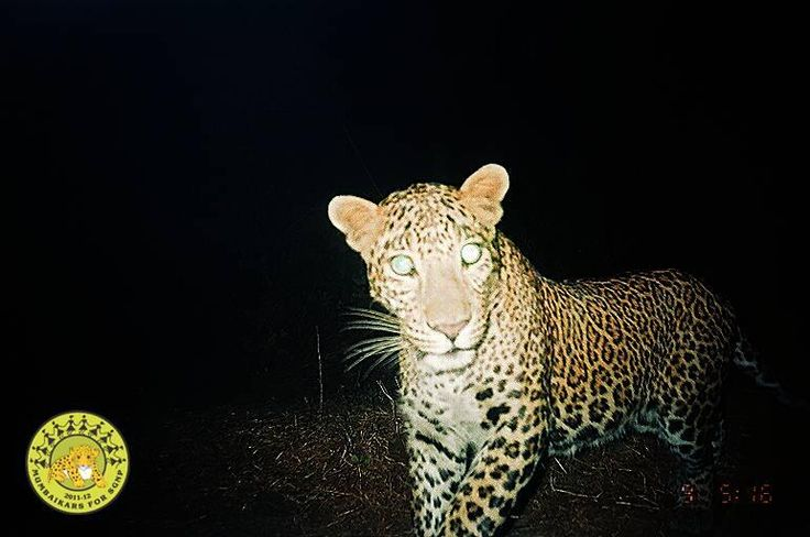 Mumbaikars For Sanjay Gandhi National Park: Kill Conflict, Not Animals