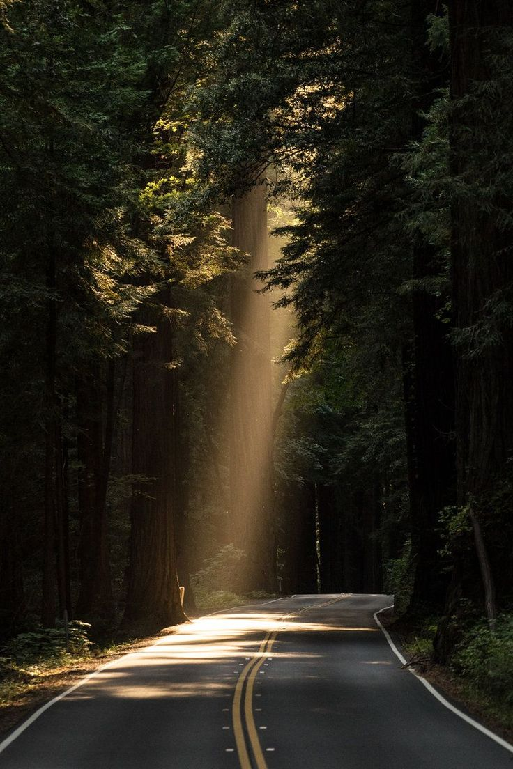 Free download of this photo: https://www.pexels.com/photo/sun-rays-goes-through-tree-on-concrete-road-132982 #light #road #landscape #GreenLandscape