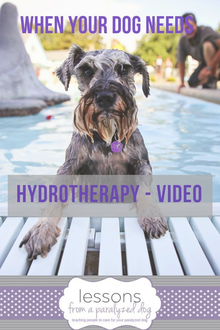 When Your Dog Needs Hydrotherapy Video Dogs Therapy Dogs Disabled Dog