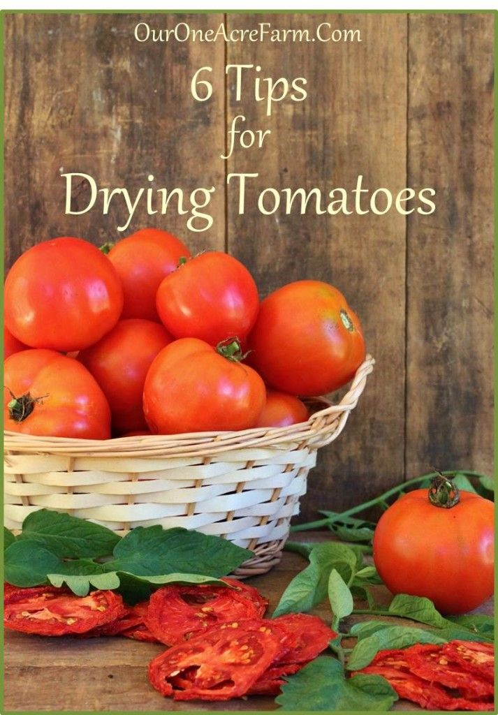 6 Tips for Drying Tomatoes on One Acre Farm at http://ouroneacrefarm.com/6-tips-drying-tomatoes/