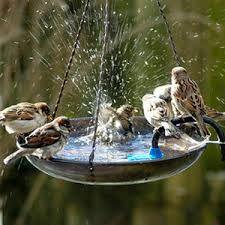 Znalezione obrazy dla zapytania poidełko dla ptaków w ogrodzie