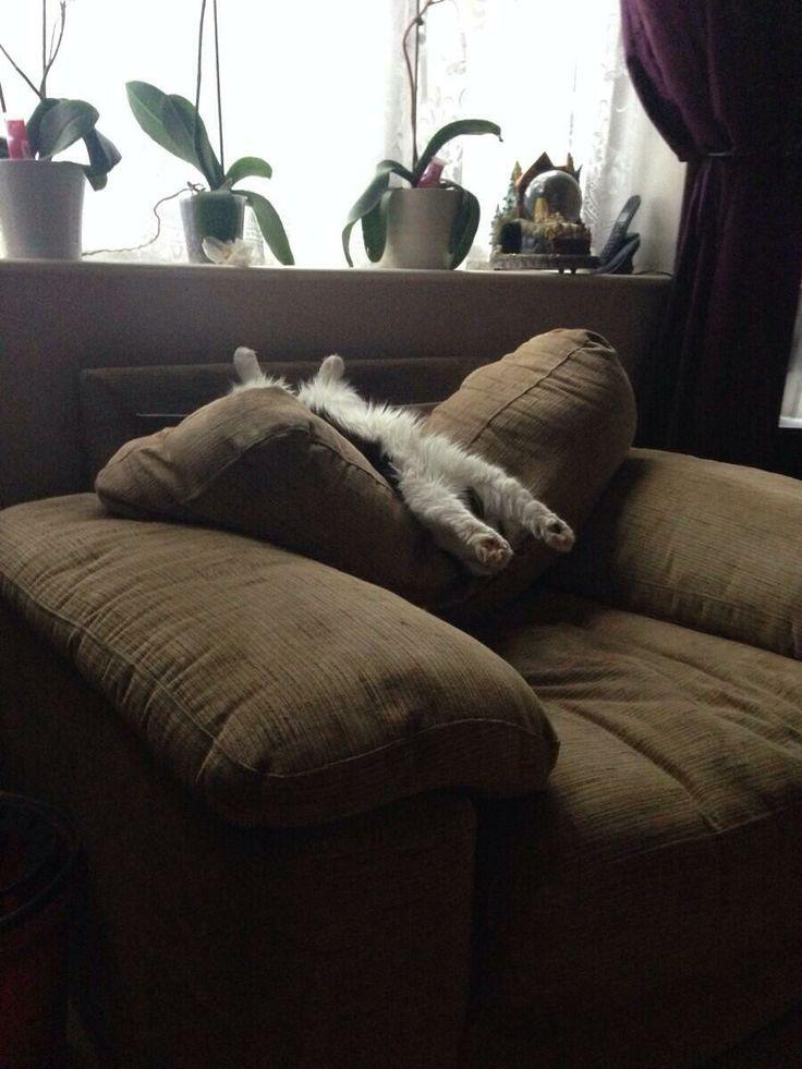 I surrender to dis comfy pillow.....zzzzz