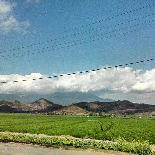 Terrace rice field ...lembor flores NTT www.florestrekkingtour.com