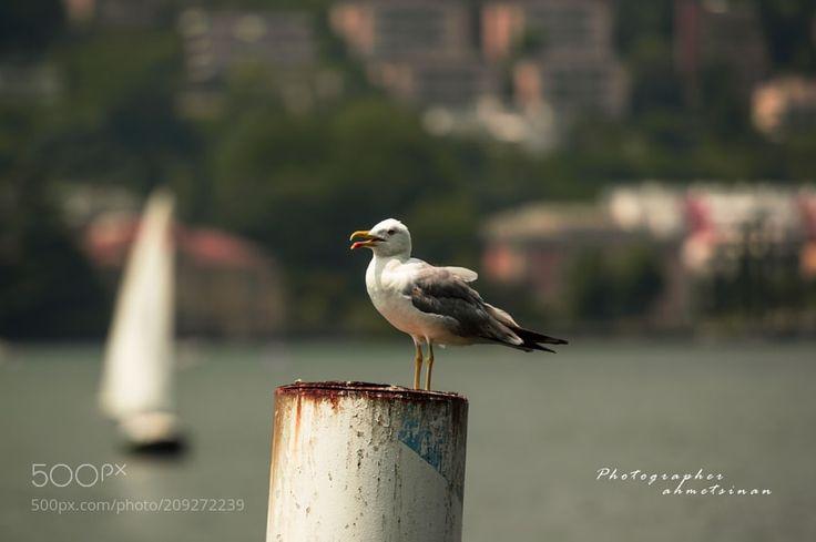 yelken kanat by sinantir from http://500px.com/photo/209272239 - İtalya como gölü. More on dokonow.com.