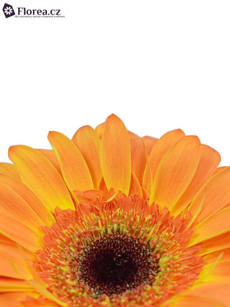 Gerbera Classic Fabio Orange http://www.florea.cz/produkty/gerbera-1 #gerbera #flowers