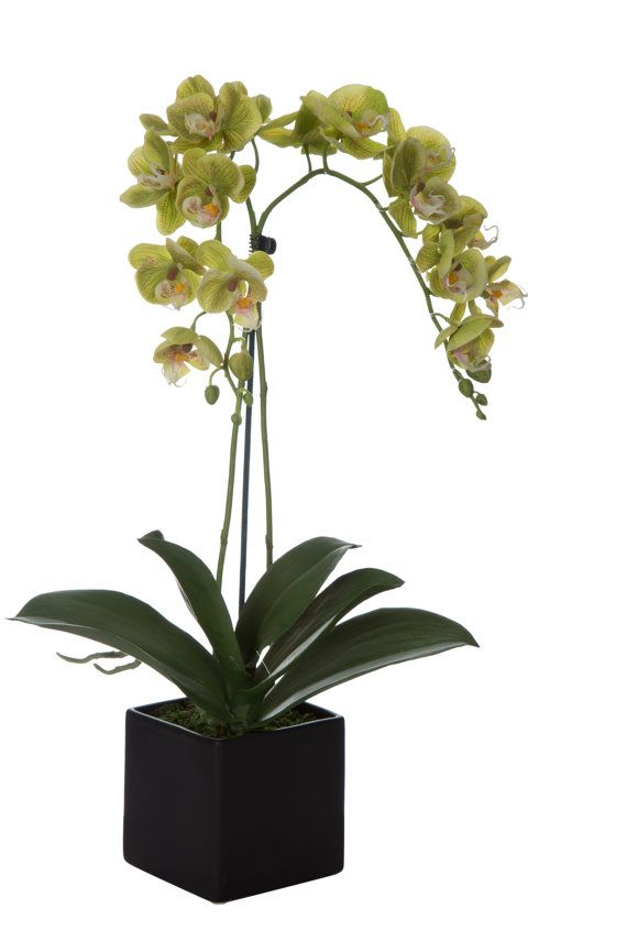items similar to pastel green baby silk orchid arrangement in urban black square ceramic pot by silkenbloom on etsy - Silk Orchids