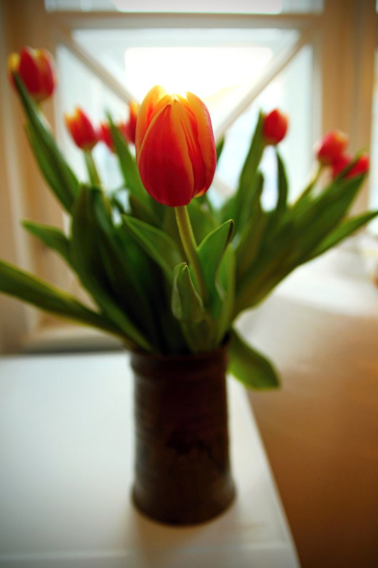 Toulips in a vase in front of a window.