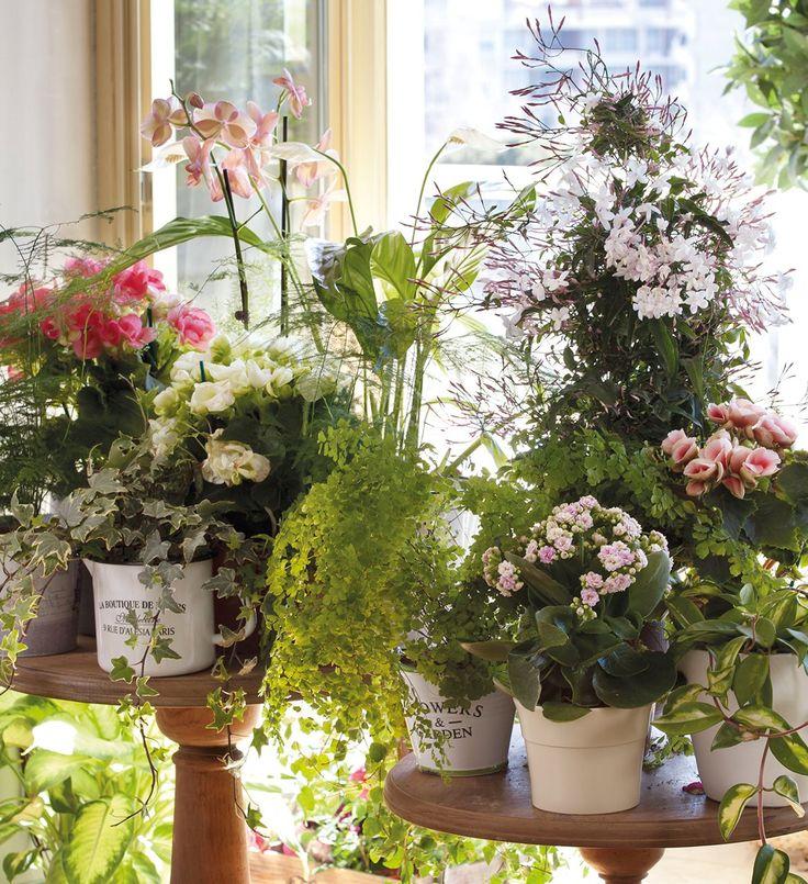 Decora con plantas y gana salud y vida - Como decorar mi patio ...
