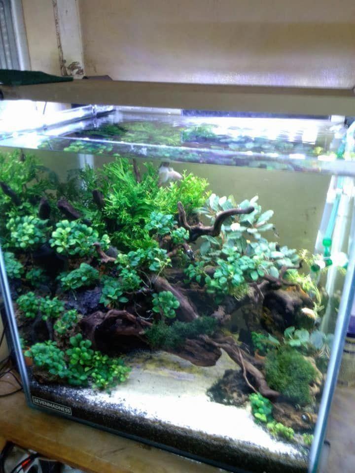 Pin By The Aquarium Store On Online Aquarium Shopping Secrets Aquarium Nano Aquarium Aquarium Design