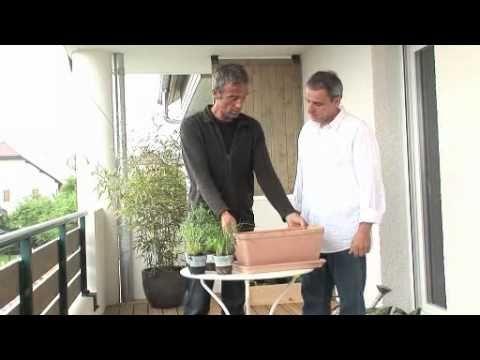 Jardiner:  jardinière de plantes aromatiques bio