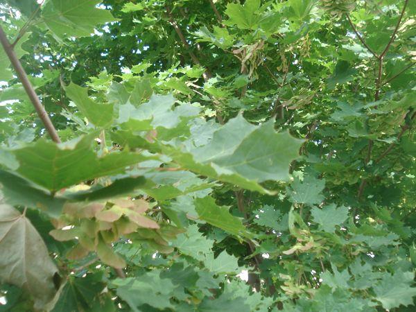Лаборатория Хобби: Мастер-класс: скелетирование листьев.