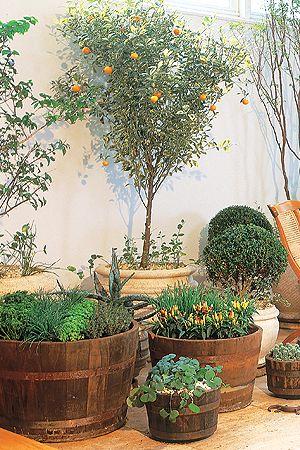 """2 - Frutíferas para um jardim """"de interior""""  Se você precisa eleger duas ou três plantas para a sua casa, aposte em frutíferas. """"Elas aludem à infância, ao quintal da casa de interior, e atraem pássaros"""", diz a paisagista Paula Galbi. As espécies mais indicadas e com porte mais elegante são a jabuticabeira, a laranjeira-kinkan, a romãzeira e a pitangueira. Plante espécies a partir de 1,60 m de altura. Em vasos, o diâmetro mínimo para acomodá-las é de 50 cm."""