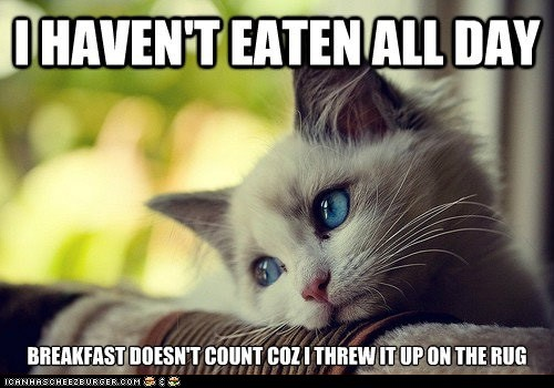 First World Cat Problems: Haven't eaten all day...: Pets, Cat Problems, So True, Funny Stuff, Humor, Things, Kittens, Kitty, Animal