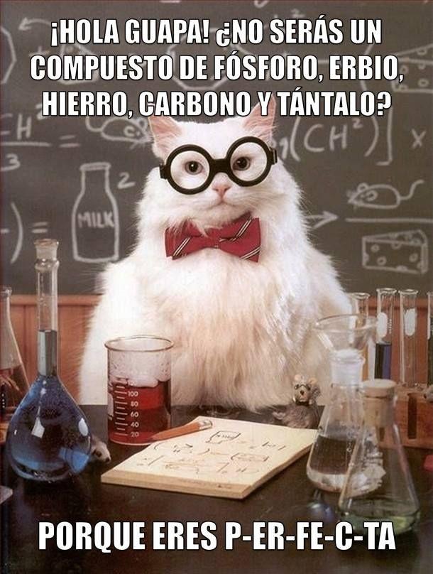 gato cientifico 12