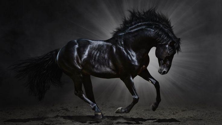Black Horse Desktop Wallpaper   Download Dark Horse HD wallpaper for 4K 3840 x 2160 - HDwallpapers.net