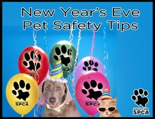 17 Best images about New Years Eve Safety on Pinterest   A ...