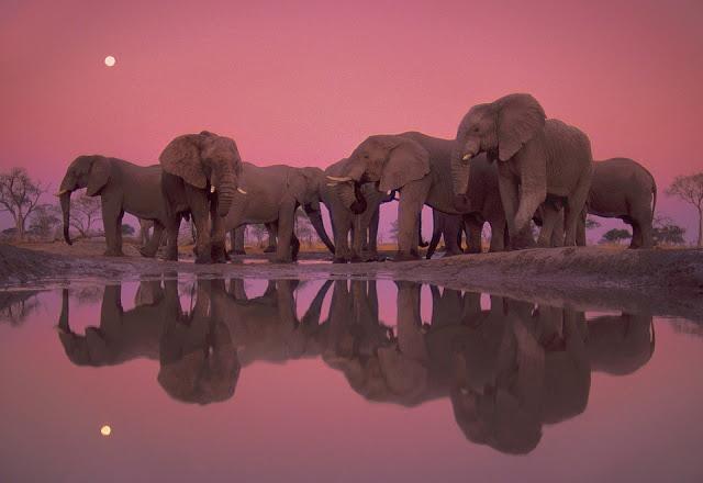 Amazing Giant Elephants