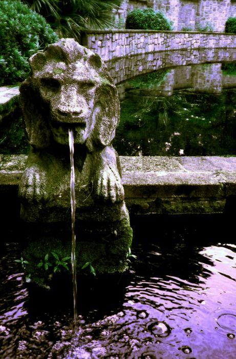 17 best images about lions on pinterest