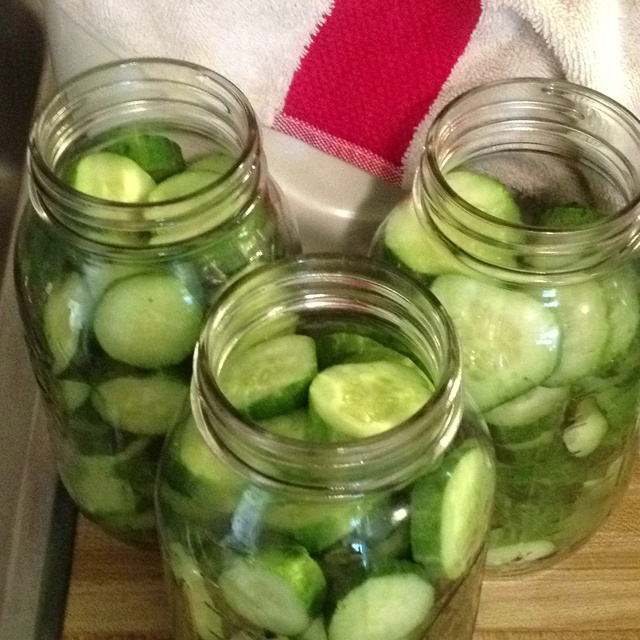 Canning pickles today