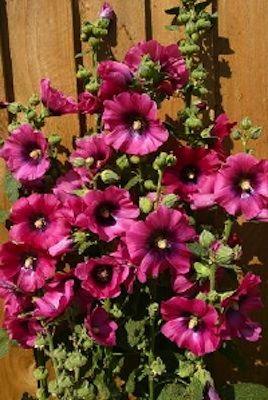 118 best flower garden images on Pinterest   Flower gardening ... Zone Garden Design Html on garden designs zone 7, garden designs zone 6, garden designs zone 3,