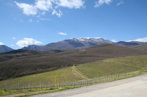 cool climate - Naoussa vineyards Macedonia Greece  #Macedonian #wine #Macedonia…