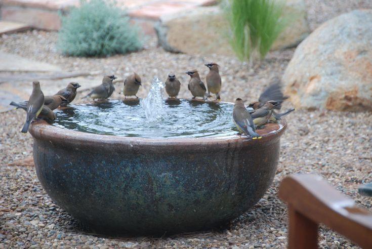 Modern Bird Bath Pictures | Bird Cages