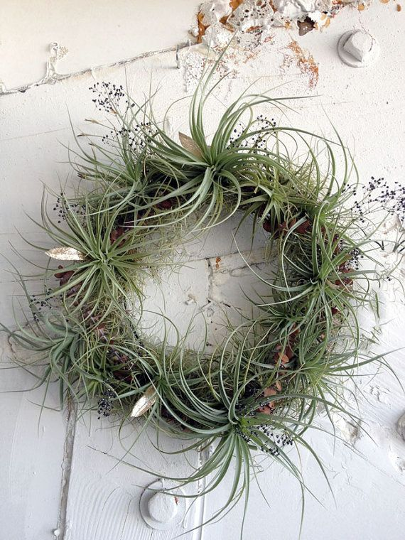 living wreath // air plant tillandsia // by by peacocktaco on Etsy, $118.00    Awesome! (except for the price... but worth it)