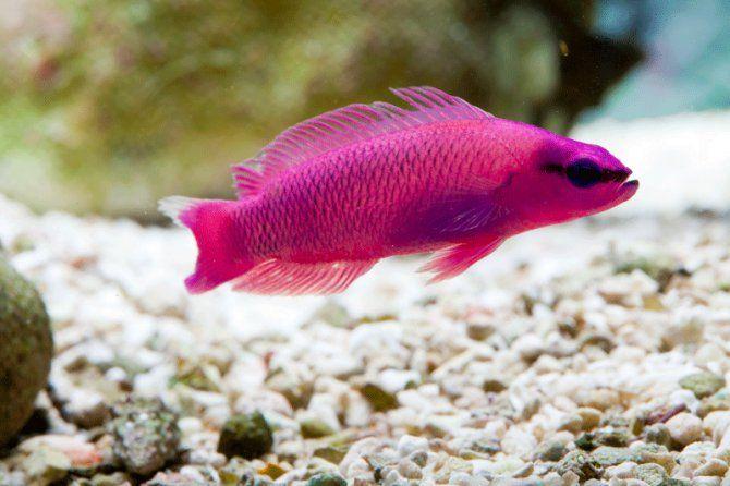 43 best images about wet pets on pinterest for Salt water fish pets