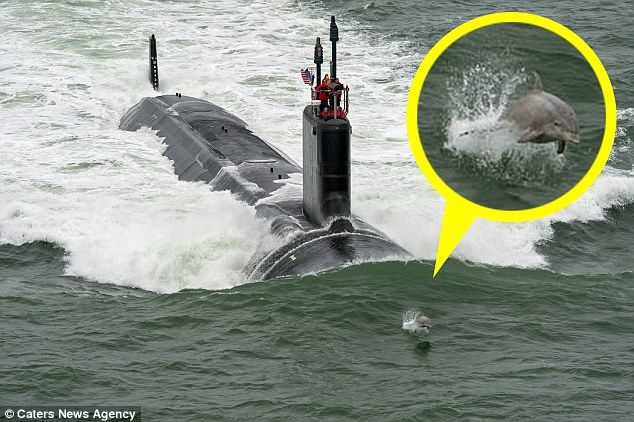 A pod of Dolphins gave a new Navy submarine a guard of honour - by swimming in its wake...