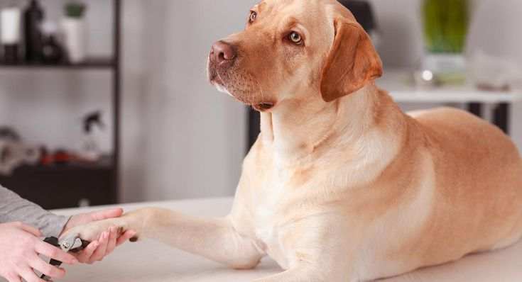 How to stop a dogs nail from bleeding quickly safely