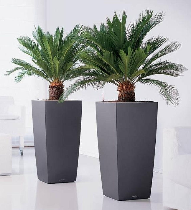 Our artificial Cycas palms look great in a stylish planter