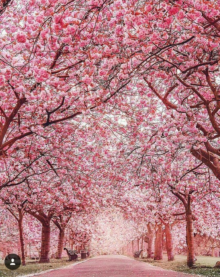Cherry blossom viewing. Probably somewhere like Ueno Park