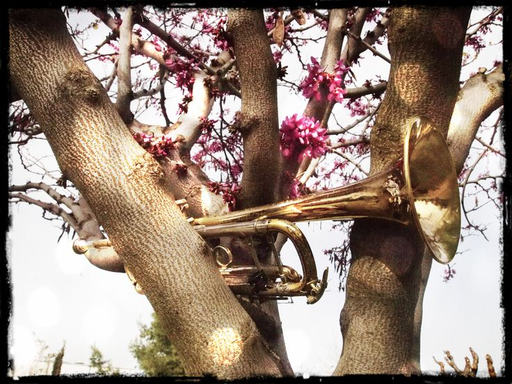...trumpet tree photo by Gianna Kostopoulou