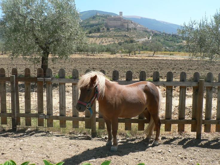 Agriturismo Il Girasole ad Assisi