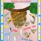 This HONEYBEE coloring picture packages contains 35 worksheets with honeybee pictures and words to trace about their family, home and body parts.  ...