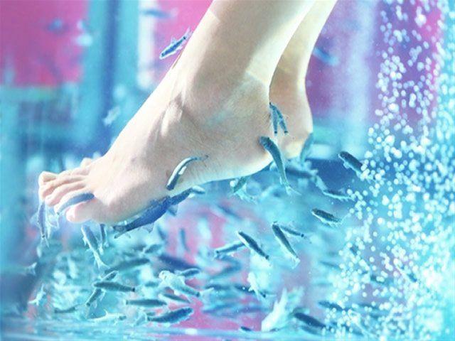 1 séance de Fish Thérapie, j'offre : http://www.web-commercant.fr/cheques/bien-etre/auray-56400/lipolift/1419-1-seance-de-fish-therapie