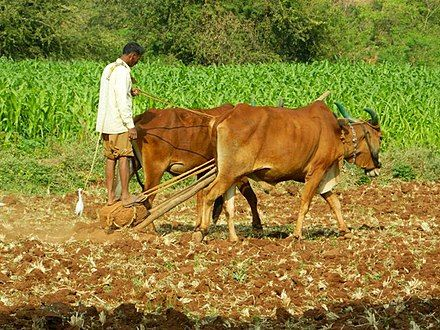 History of agriculture - Wikipedia