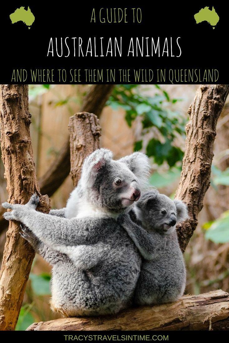 A guide to native Australian animals and where to find them in their natural habitat | Native Australian Animals| #koala #kangaroo #platypus #crocodiles #dingo #possum #turtles