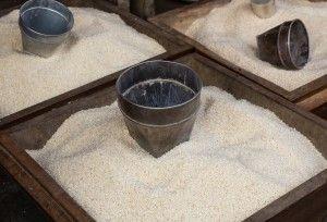 THAI REIS RICHTIG KOCHEN:  Man füllt den Reistopf mit 2 Tassen Reis und wäscht ihn mit kaltem Wasser bis  das Reismehl entfernt ist. Dies ist notwendig damit der Reis die Konsistenz bekommt, die Thais bevorzugen: Körnig, leicht und locker. Danach füllt man den Topf mit 2 Tassen kaltem Wasser, setzt ihn in den Reiskocher, schaltet ihn ein und wartet bis er auf Warmhalten umschaltet. Für eine bessere Konsistenz lässt man den Reiskocher noch ca. 5 Minuten geschlossen.