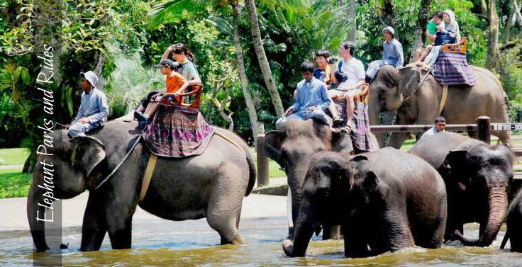 Elephant-Parks-and-Rides